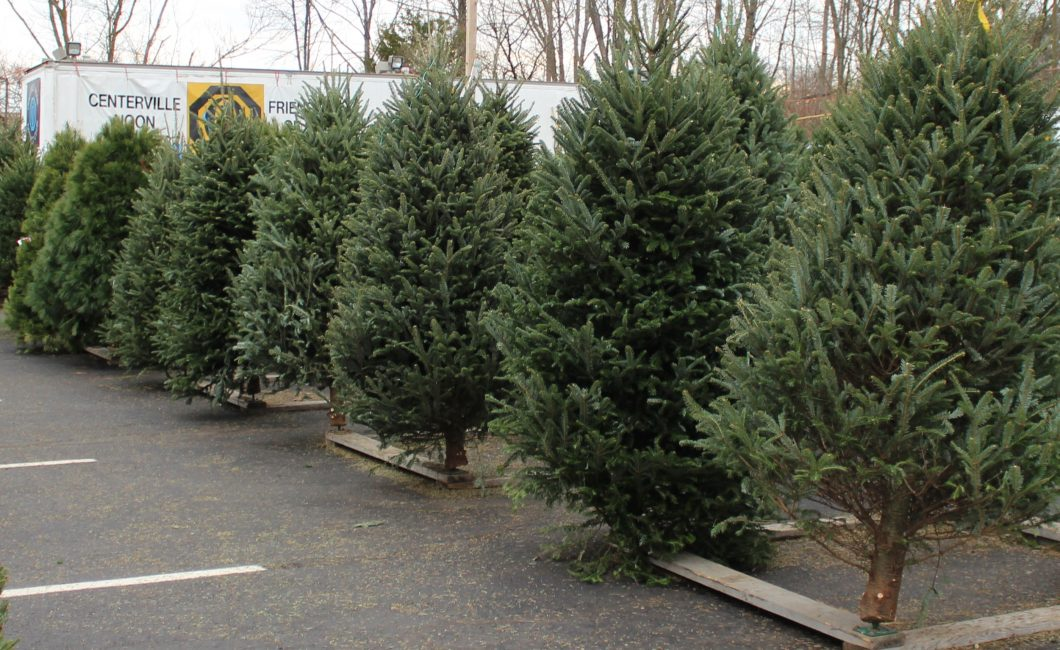 Christmas Tree Lot – Celebrating our 51st Year in 2018