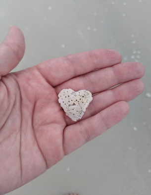 Picture of a hand holding a heart shaped shell.